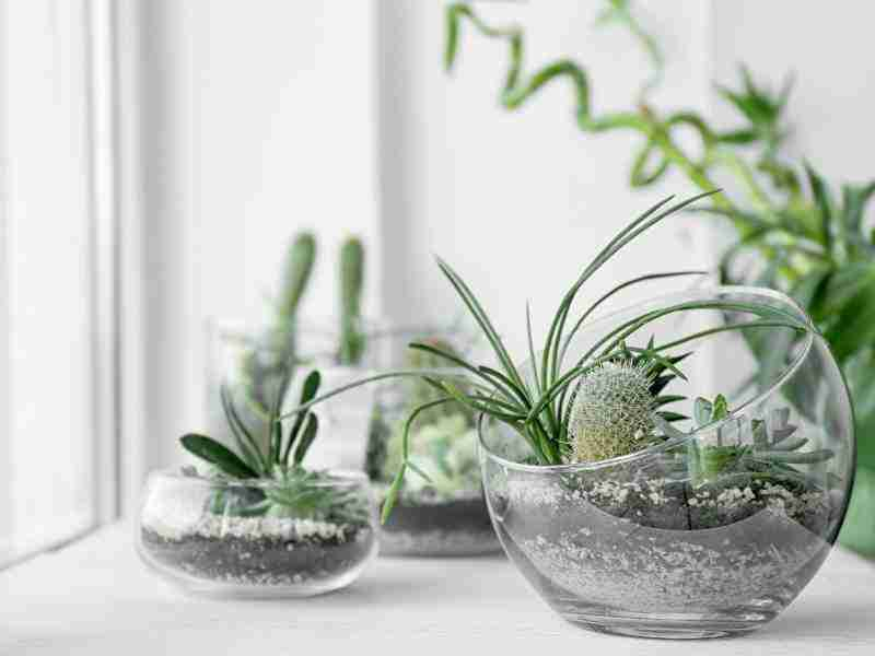 take care of indoor plants