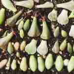How to Propagate Succulents Easily