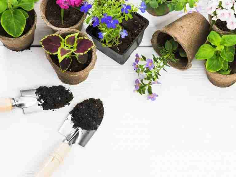 Beginners Guide to taking care of indoor plants
