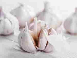 How To Plant and Grow Garlic for an Entire Year