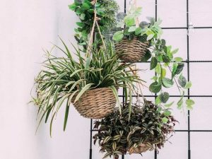 11 Most Common Mistakes First Time Plant Owners make