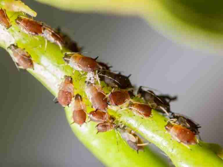 How to Effectively Treat Most Common Houseplant Pests (Pesticide 101)