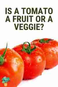 Is a tomato a fruit or a veggie?