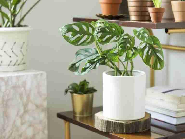 Ultimate Handbook of Indoor Plant Care