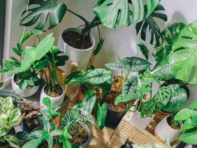 3 Best Free Plant Identification Apps [Tested & Reviewed]