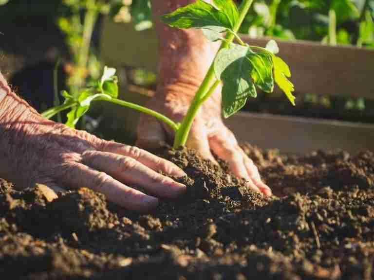 Tips For Garden Planning