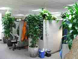 What are the best office plants that are easy to care for?