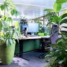 Can plants grow under office lights?