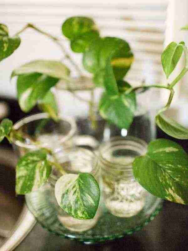 How to Propagate Plants