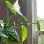 50+ Most Popular Philodendron Species to add to your collection (2021)
