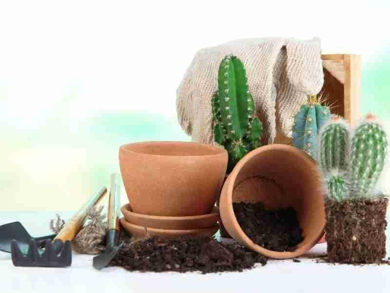 best dirt for succulents
