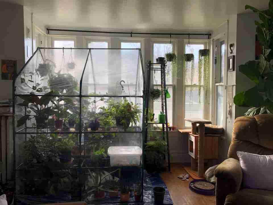 Best Indoor Greenhouses