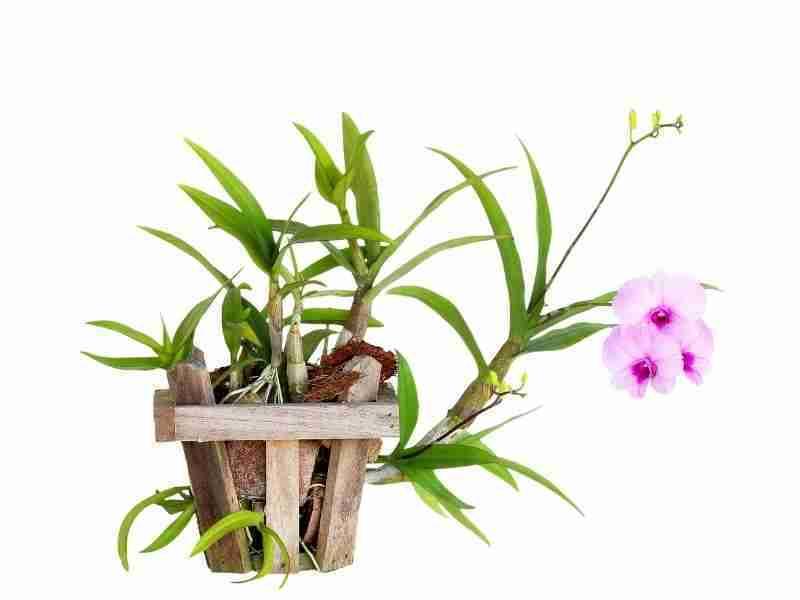 Best Pots For Orchids