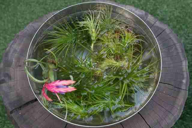 water air plants
