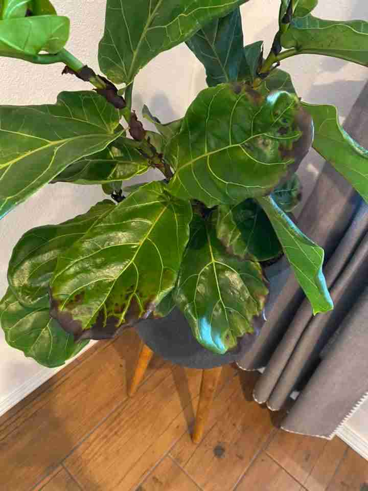 How to spot root rot
